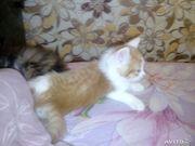 Отдам котенка Пермь,  отдам в хорошие руки кота Пермь,  отдам кошку Перм
